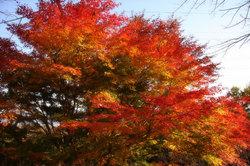 秋.jpg